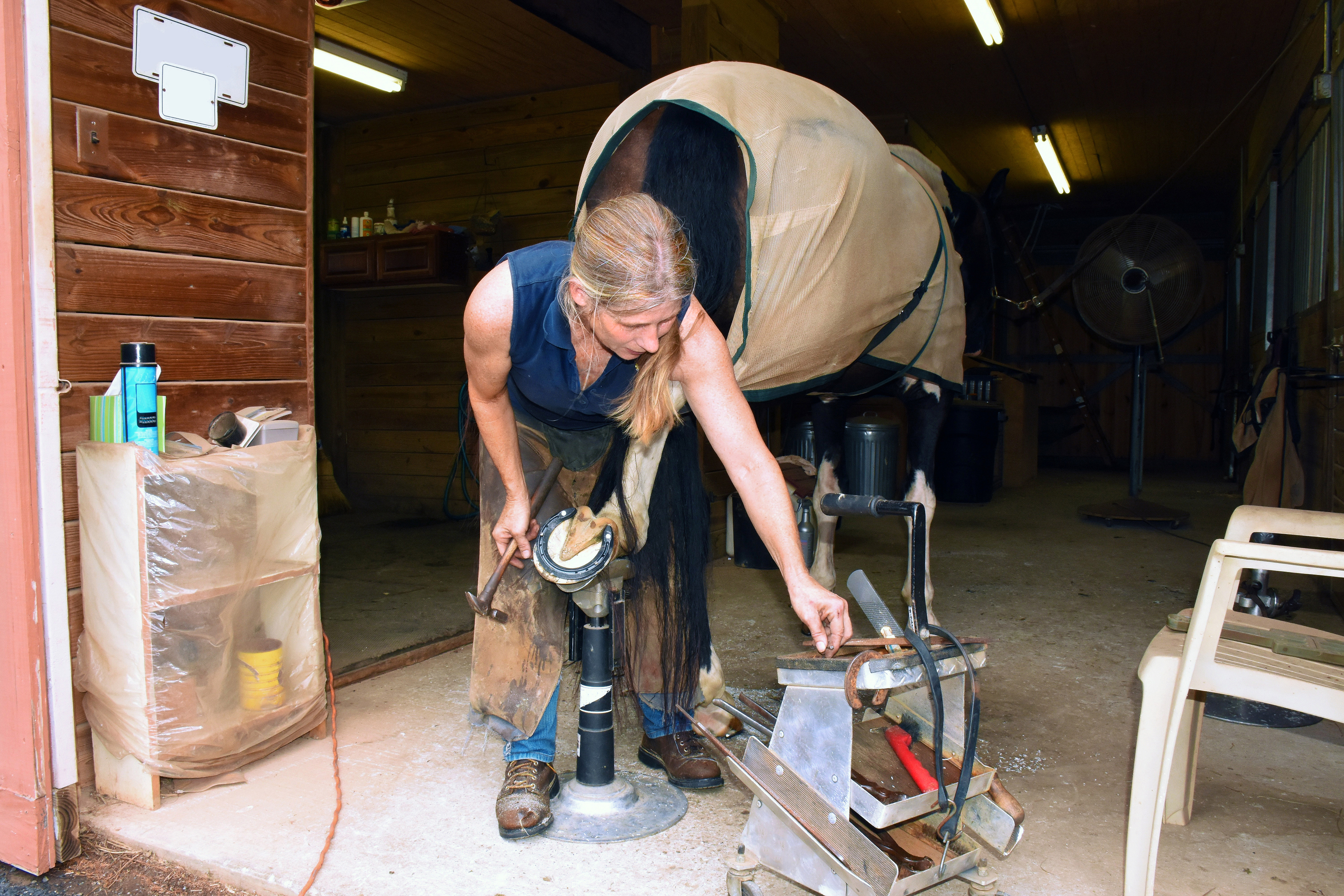 A farrier is shoeing a horse's back leg