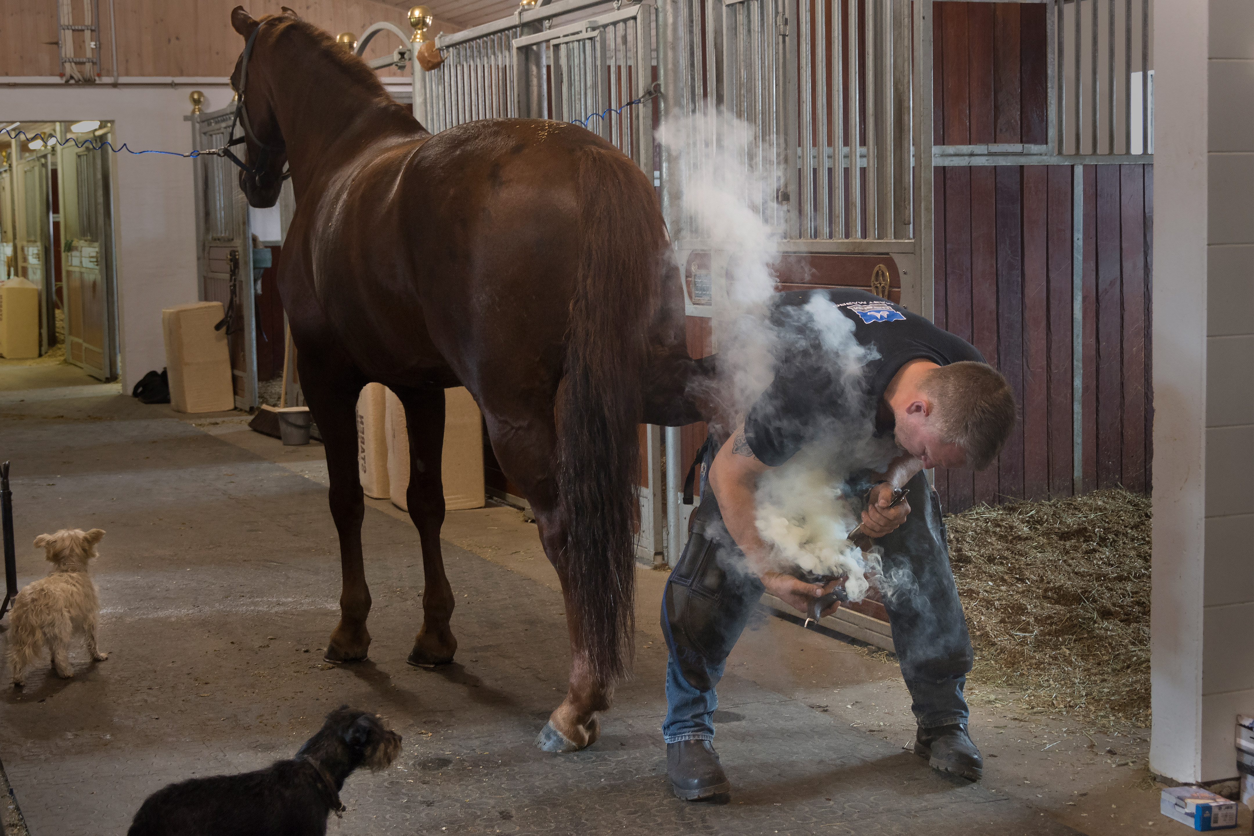 Norwegian farrier Aksel Vibe shoeing a horse in a stable
