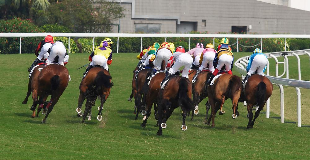 The entire field of competitors seen at the back in a Flat racing contest
