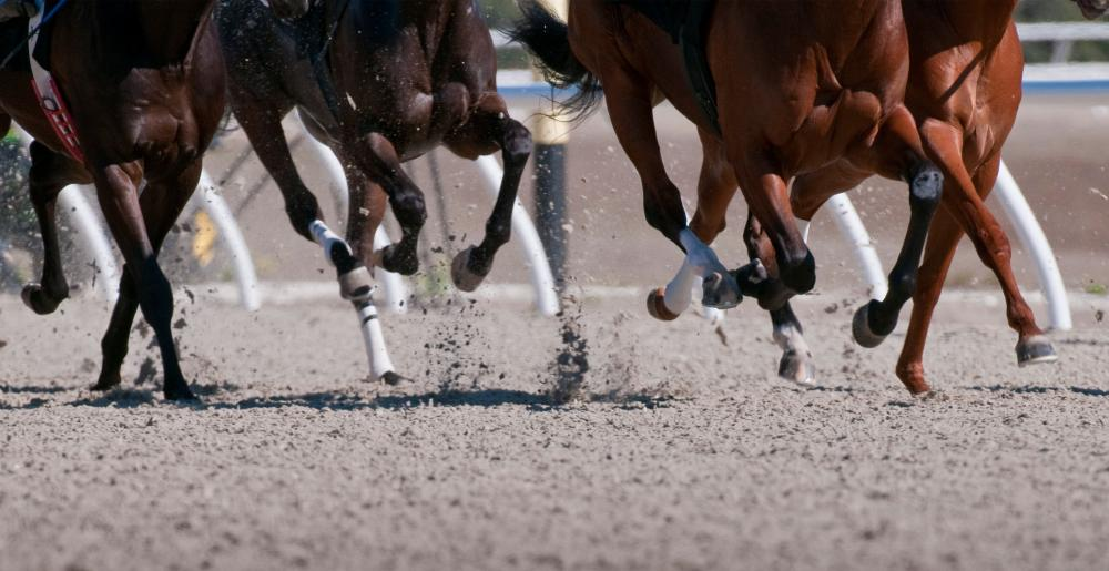 Horse legs in a Flat racing contest