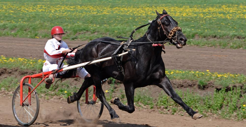A trotter at full speed