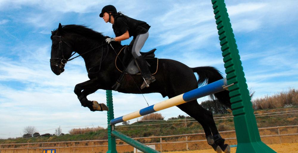 A show jumper in a training