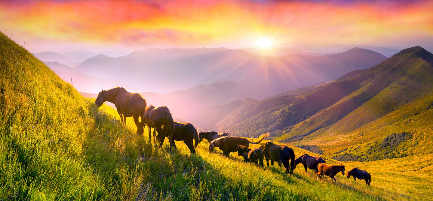 Horses on a mountain