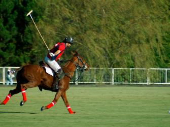 A polo player